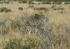 safari5